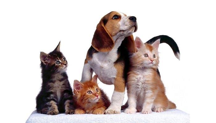 Cuidador de Animales foto 2