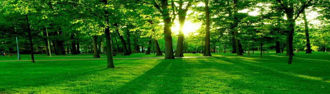 Medio Ambiente foto 1