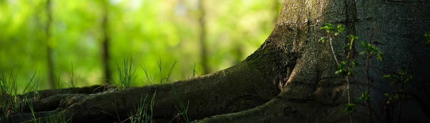 Medio Ambiente foto 20