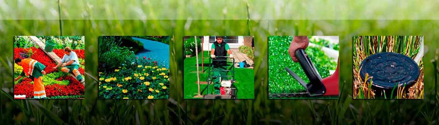 Sector Primario y Cultivos foto 10