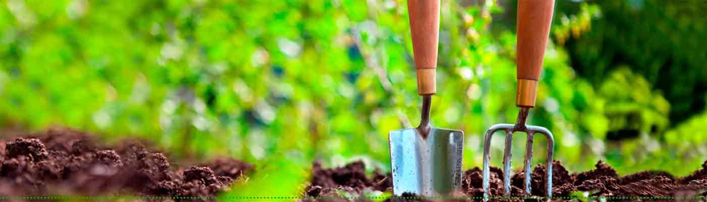 Sector Primario y Cultivos foto 17