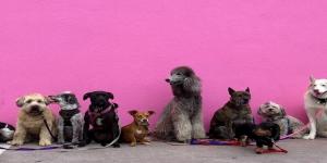 Guardería de animales