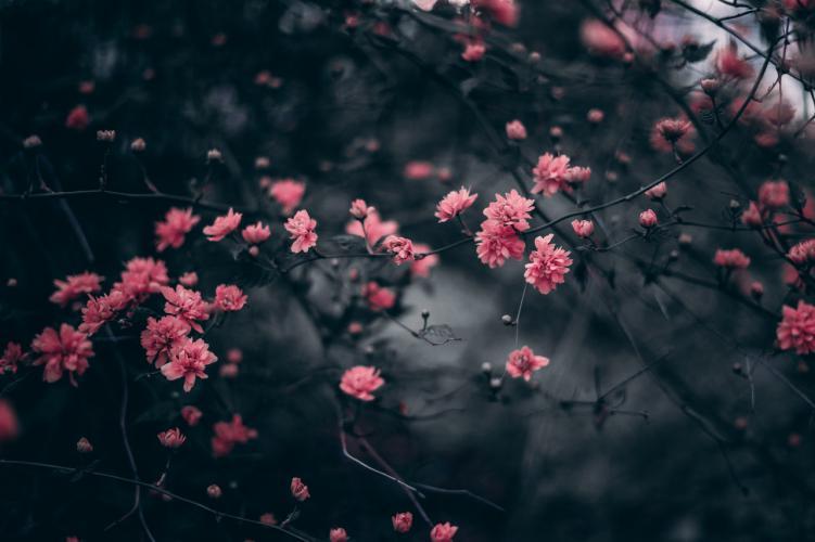 Como ser flores