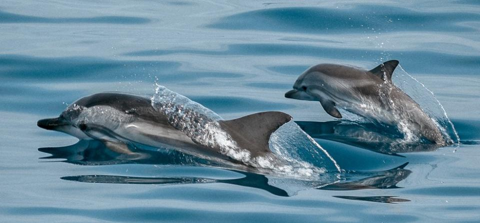 Como ser delfines españa