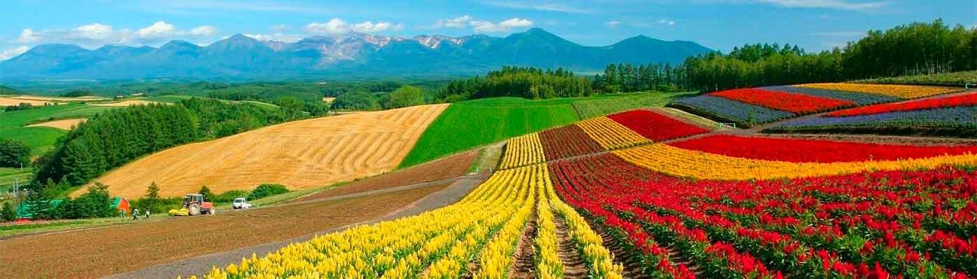 Agricultura foto 1