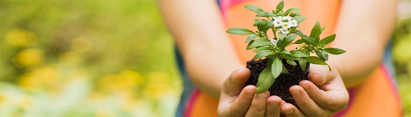 Jardinería foto 1