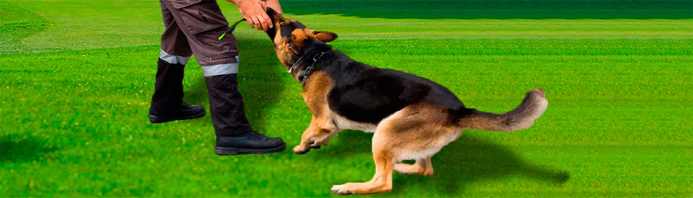 Adiestramiento Canino foto 1