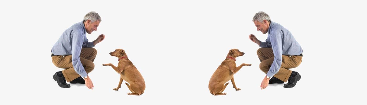 Adiestramiento Canino foto 2