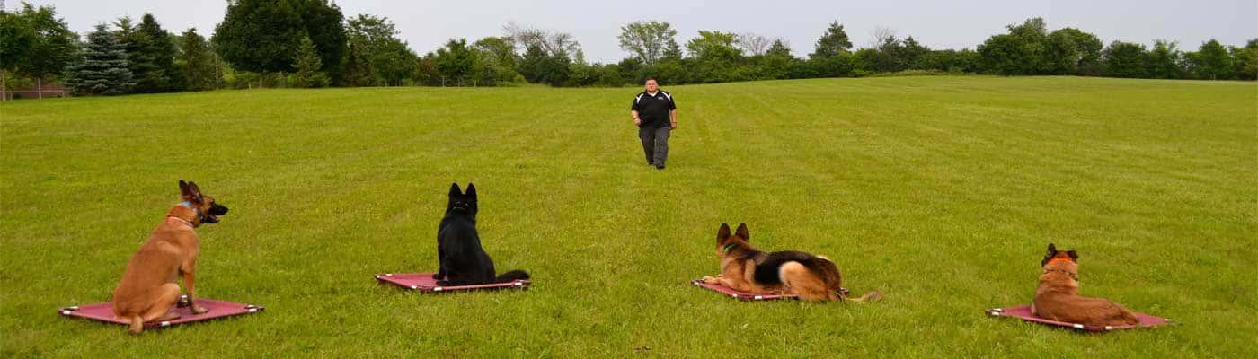 Adiestramiento Canino foto 3