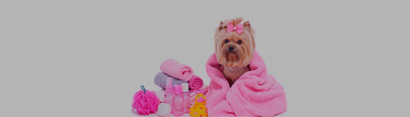 Peluqueria y Estetica Canina foto 1