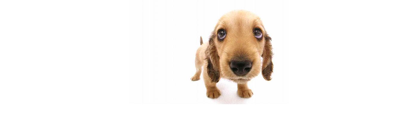 Peluqueria Estetica Canina foto 2