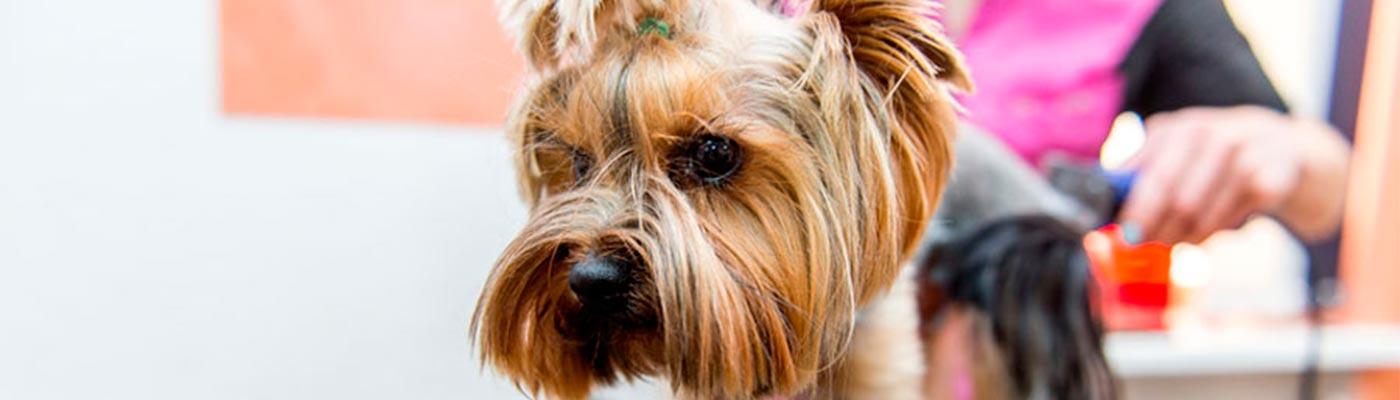 Peluqueria Estetica Canina foto 3