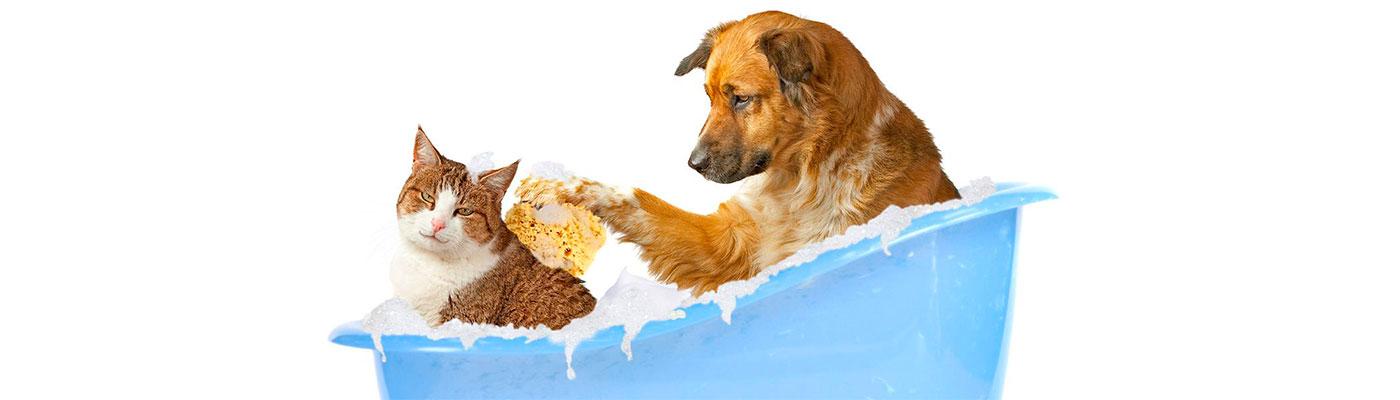 Peluqueria Estetica Canina foto 4