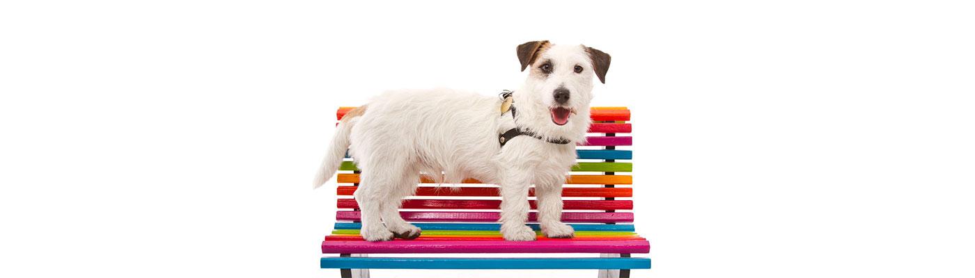 Peluqueria Estetica Canina foto 5