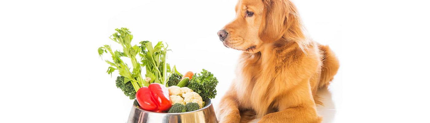Nutrición Veterinaria foto 5