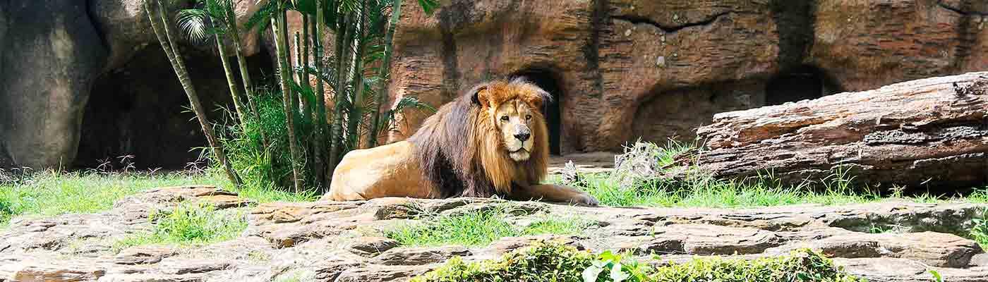 Dirección de Zoológicos foto 1