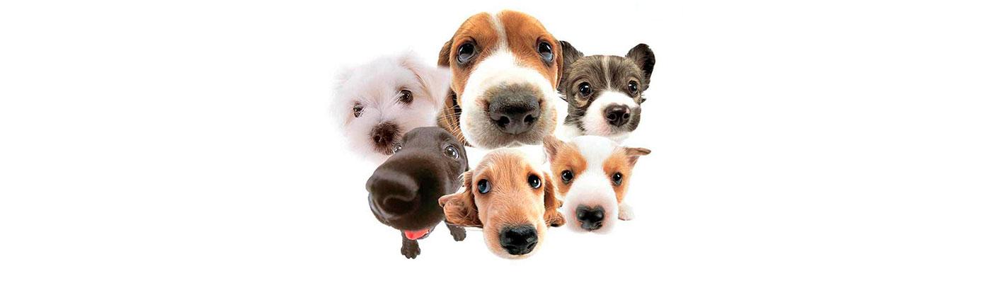 Cuidador de Animales foto 1