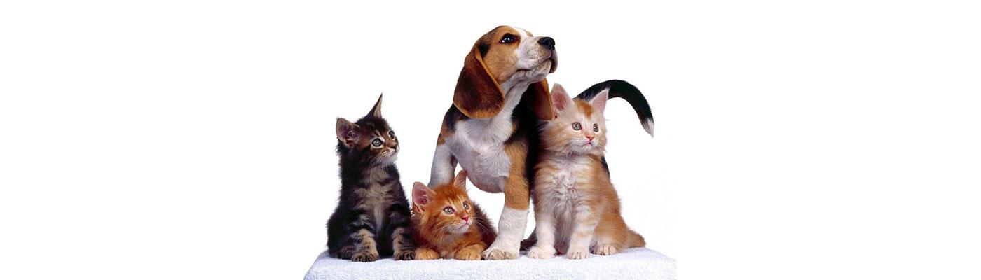 Cuidado de Animales foto 2