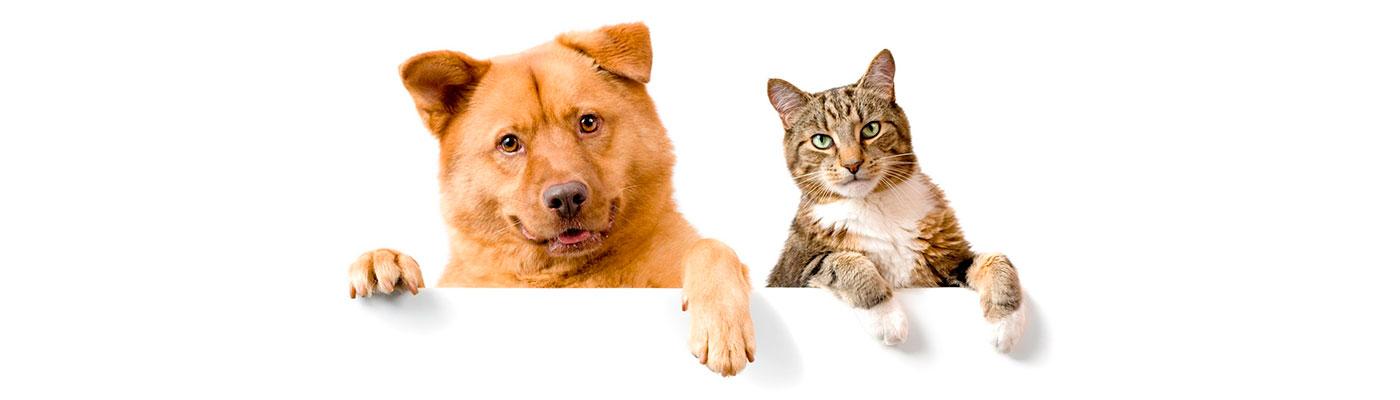 Cuidador de Animales foto 3